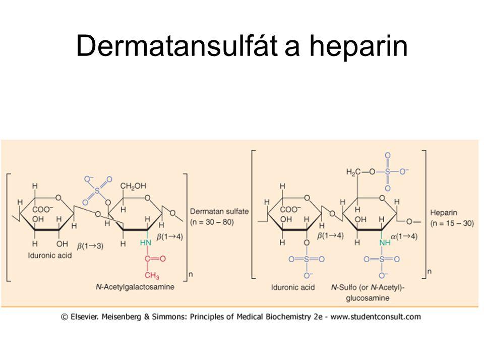 Dermatansulfát a heparin