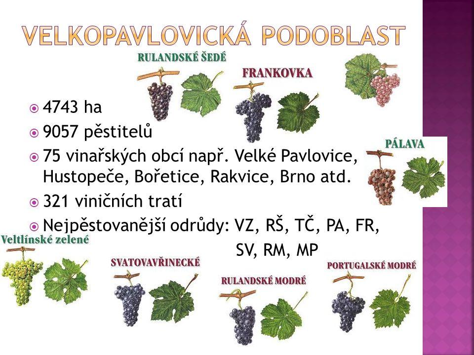  4743 ha  9057 pěstitelů  75 vinařských obcí např.