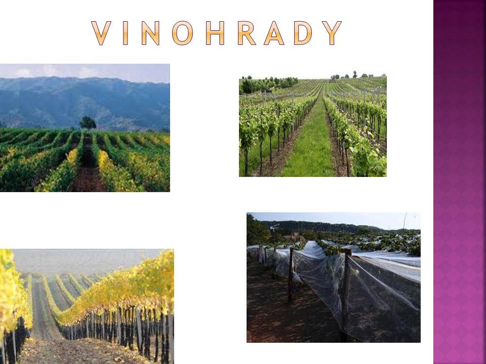  3162 ha  1385 pěstitelů  90 vinařských obcí např.