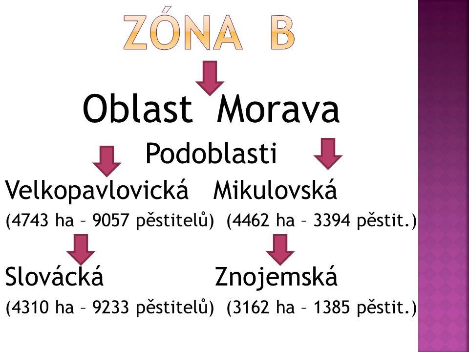 Oblast Morava Podoblasti Velkopavlovická Mikulovská (4743 ha – 9057 pěstitelů) (4462 ha – 3394 pěstit.) Slovácká Znojemská (4310 ha – 9233 pěstitelů) (3162 ha – 1385 pěstit.)