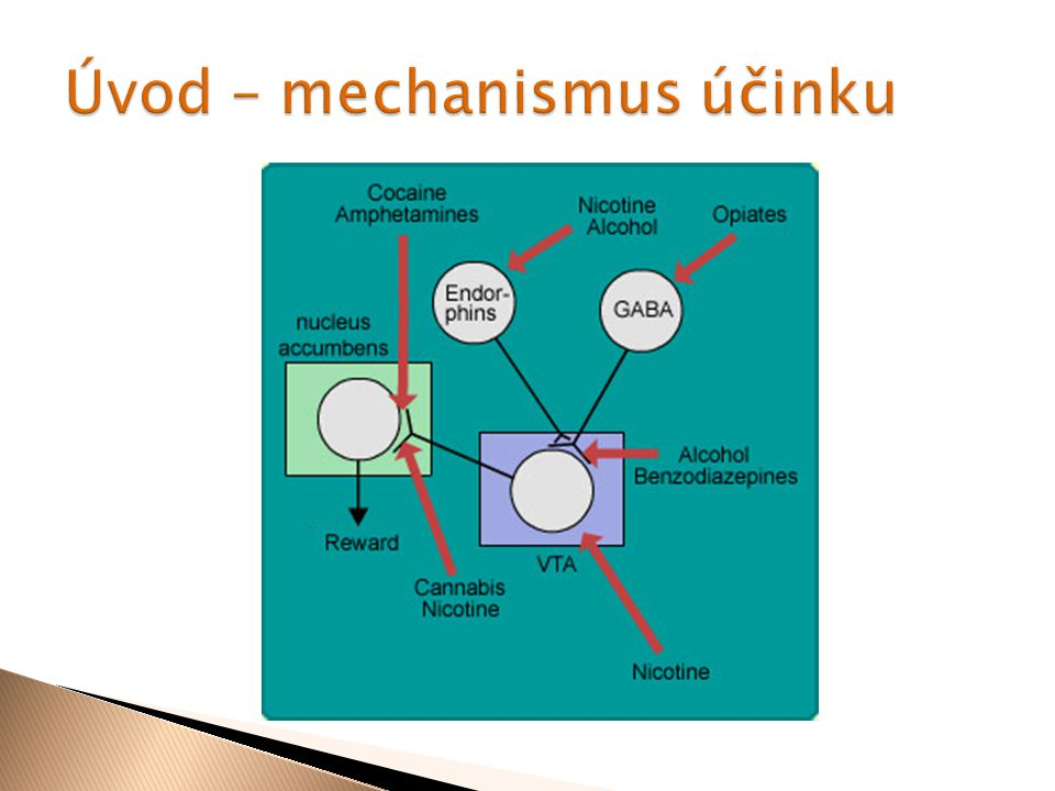  Efekt podobný amfetaminům, princip jiný zpomalení zpětného transportu dopaminu  Odbourávání: hydrolýza esterové vazby a vznik benzoylecgoninu