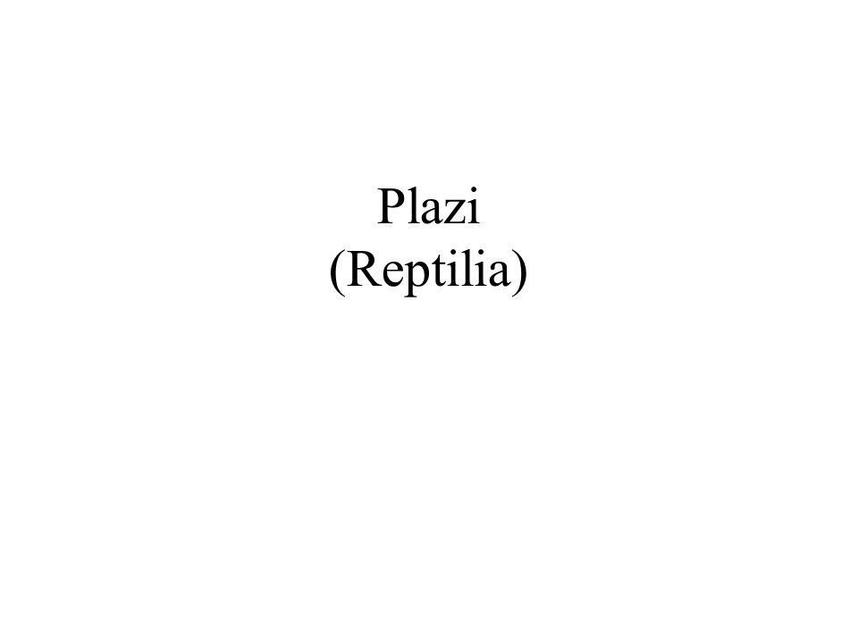 Plazi (Reptilia)