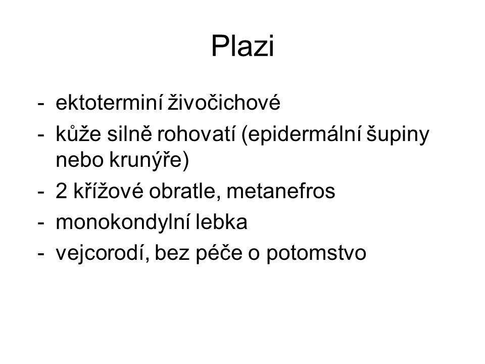 Plazi -ektoterminí živočichové -kůže silně rohovatí (epidermální šupiny nebo krunýře) -2 křížové obratle, metanefros -monokondylní lebka -vejcorodí, bez péče o potomstvo