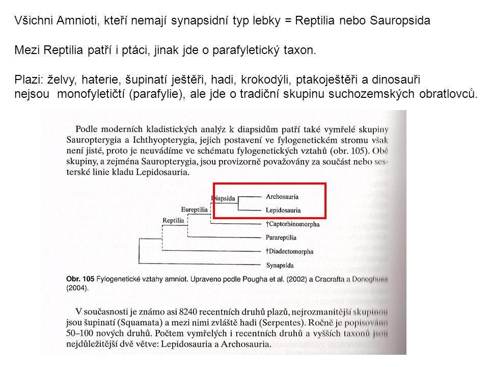 Želvy - Testudines (Chelonia, Testudinata) Pleziomorfní znaky želv: anapsidní lebka (sekundárně), Jacobsonúv orgán, podélná kloakální štěrbina, žebra vrostlá do krunýře (není hrudní koš), nepárový erektilní penis, kladení vajec krunýř – derivát pokožky a škáry, tedy rohovitá vrstva s kostěnými štíty, karapax (hřbetní část), plastron (břišní část) pětiprsté končetiny s drápy, často zatažitelné pod krunýř tlama – rohovité lišty Dvě skupiny: Pleurodira – skrytohlaví - zatahují hlavu ohybem krku do strany, jižní polokoule Cryptodira – skrytohrdlí - zatahují hlavu pozpátku (krk se skládá esovitě), příp.