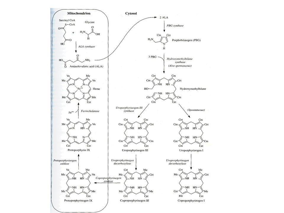 Porfyrie: charakterizovány hromaděním porfyrinů nebo jejich prekurzorů v některých tkáních zvýšenou hladinou v plasmě či v erytrocytech zvýšeným vylučováním porfyrinů nebo jejich prekurzorů stolicí nebo močí Klinické příznaky: Fotosenzitivita – absorpce světla v oblasti 400 nm, volné radikály poškodí kožní buňky Akutní bolest v břiše a neurologické příznaky