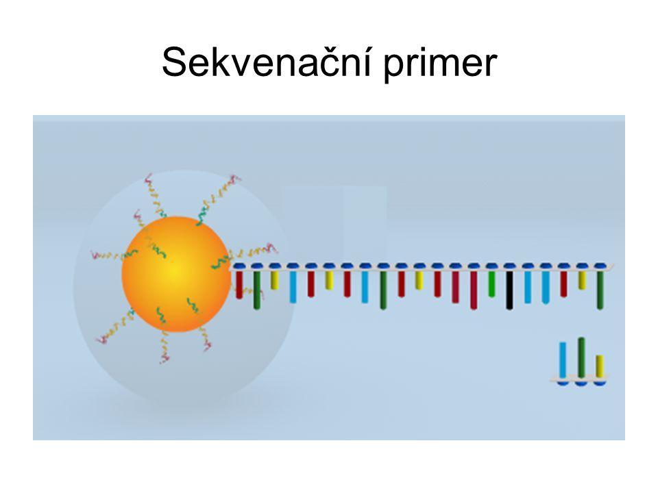 Sekvenační primer