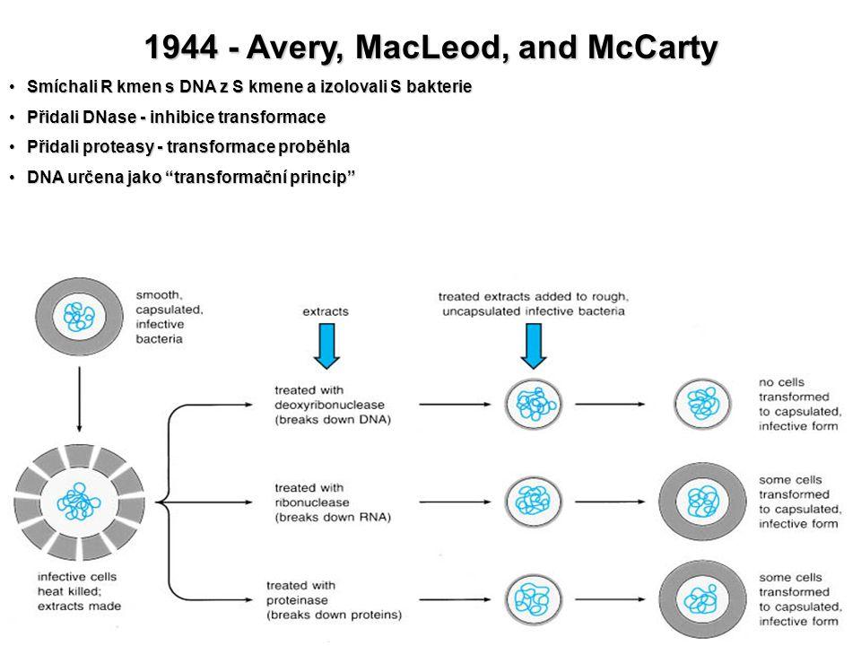 1944 - Avery, MacLeod, and McCarty Smíchali R kmen s DNA z S kmene a izolovali S bakterieSmíchali R kmen s DNA z S kmene a izolovali S bakterie Přidal