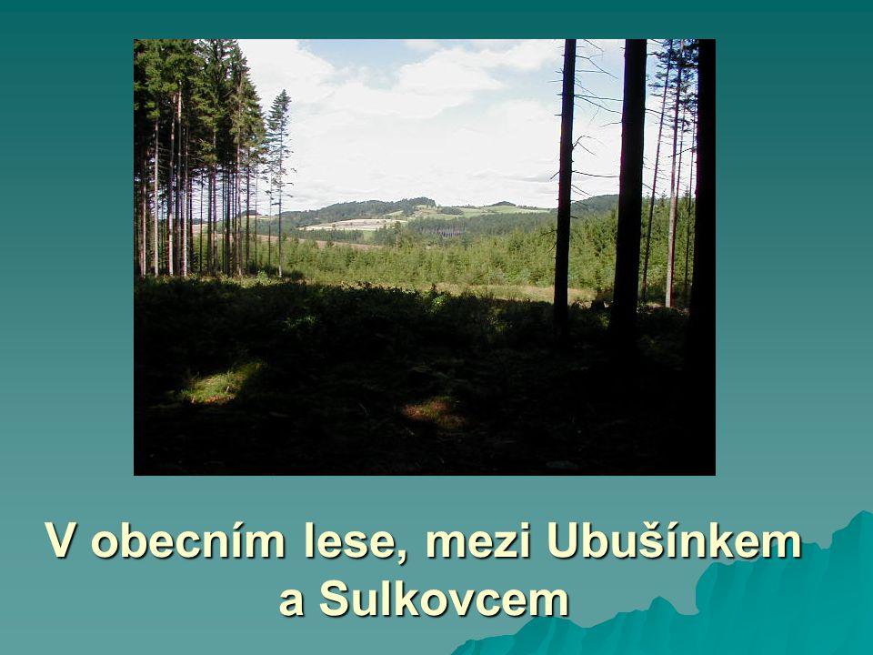 V obecním lese, mezi Ubušínkem a Sulkovcem