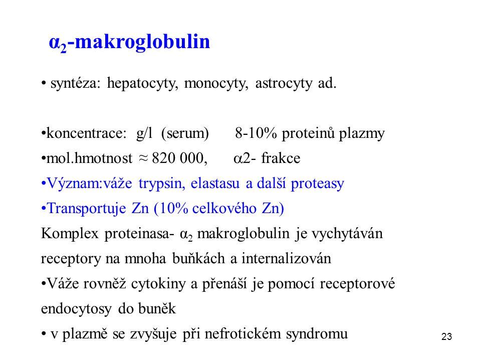 23 α 2 -makroglobulin syntéza: hepatocyty, monocyty, astrocyty ad.