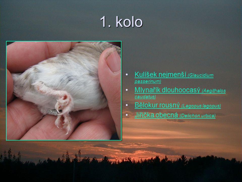 1. kolo Kulíšek nejmenší (Glaucidium passerinum)Kulíšek nejmenší (Glaucidium passerinum) Mlynařík dlouhoocasý (Aegithalos caudatus)Mlynařík dlouhoocas