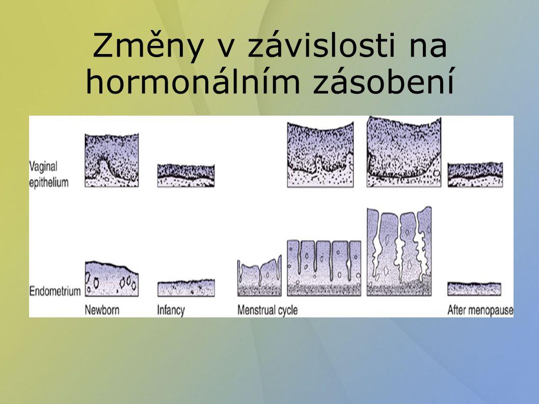 Změny v závislosti na hormonálním zásobení