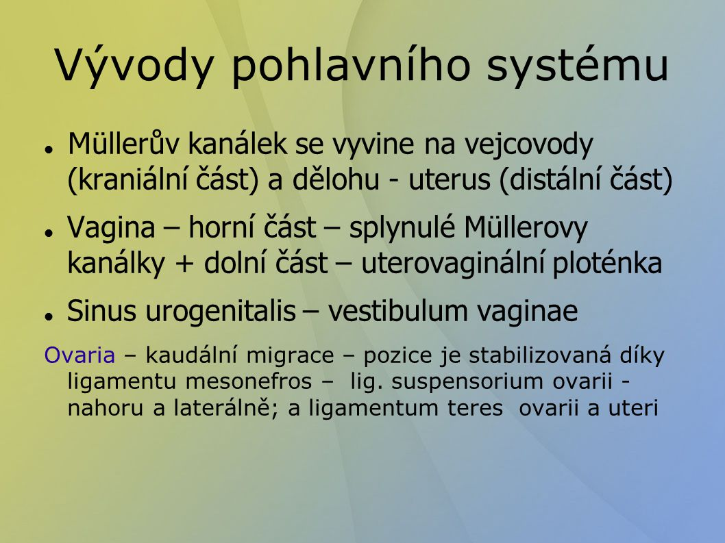 Vývoj zevního genitálu Phallus – clitoris Uretrální řasy – labia minora Labioscrotální valy – labia majora Sinus urogenitalis – vestibulum vaginae