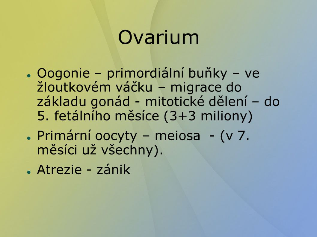 """Ovarium Povrchový epitel – jednovrstevný kubický - """"zárodečný Tunica albuginea Kůra – folikuly (primordiální, primární, sekundární, Graafův) žluté tělísko, bílé tělísko Dřeň - cévy"""