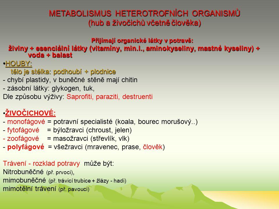 METABOLISMUS HETEROTROFNÍCH ORGANISMŮ (hub a živočichů včetně člověka) Přijímají organické látky v potravě: živiny + esenciální látky (vitamíny, min.l., aminokyseliny, mastné kyseliny) + voda + balast HOUBY:HOUBY: tělo je stélka: podhoubí + plodnice tělo je stélka: podhoubí + plodnice - chybí plastidy, v buněčné stěně mají chitin - zásobní látky: glykogen, tuk, Dle způsobu výživy: Saprofiti, paraziti, destruenti ŽIVOČICHOVÉ: - monofágové = potravní specialisté (koala, bourec morušový..) - fytofágové = býložravci (chroust, jelen) - zoofágové = masožravci (střevlík, vlk) - polyfágové = všežravci (mravenec, prase, člověk) Trávení - rozklad potravy může být: Nitrobuněčné (př.