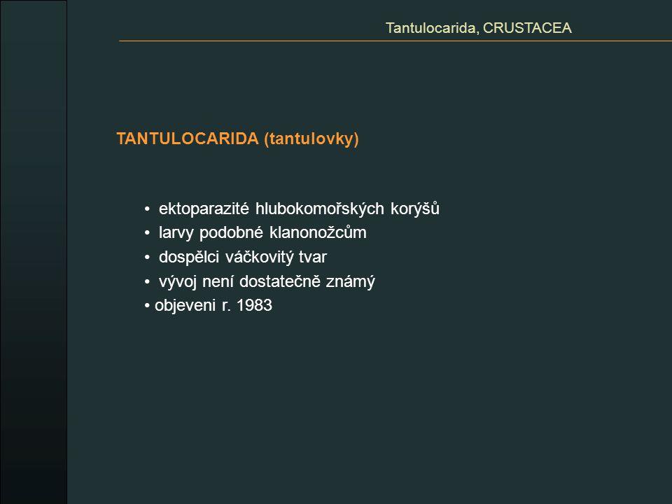 TANTULOCARIDA (tantulovky) Tantulocarida, CRUSTACEA ektoparazité hlubokomořských korýšů larvy podobné klanonožcům dospělci váčkovitý tvar vývoj není d