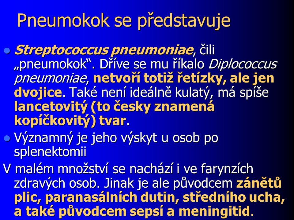 "Pneumokok se představuje Streptococcus pneumoniae, čili ""pneumokok ."