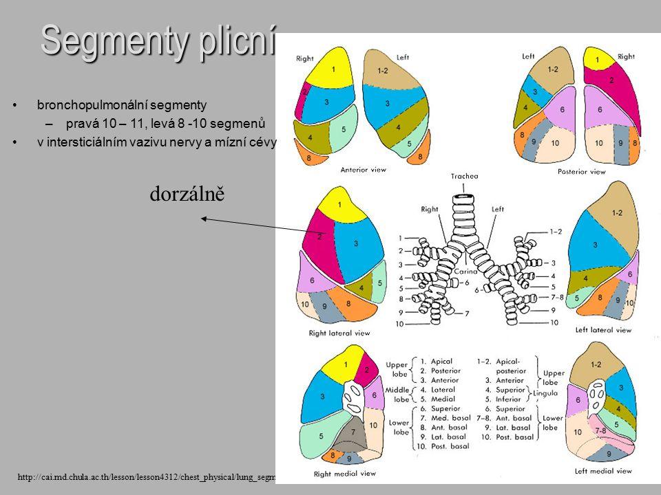 Segmenty plicní http://cai.md.chula.ac.th/lesson/lesson4312/chest_physical/lung_segment.jpg dorzálně bronchopulmonální segmenty – –pravá 10 – 11, levá