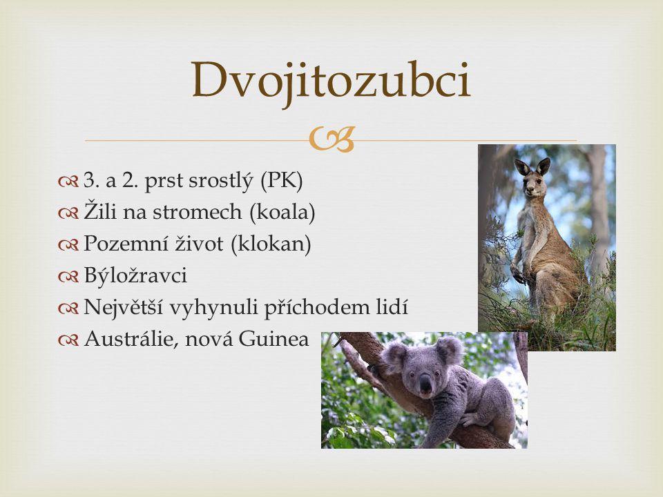   3. a 2. prst srostlý (PK)  Žili na stromech (koala)  Pozemní život (klokan)  Býložravci  Největší vyhynuli příchodem lidí  Austrálie, nová Gu
