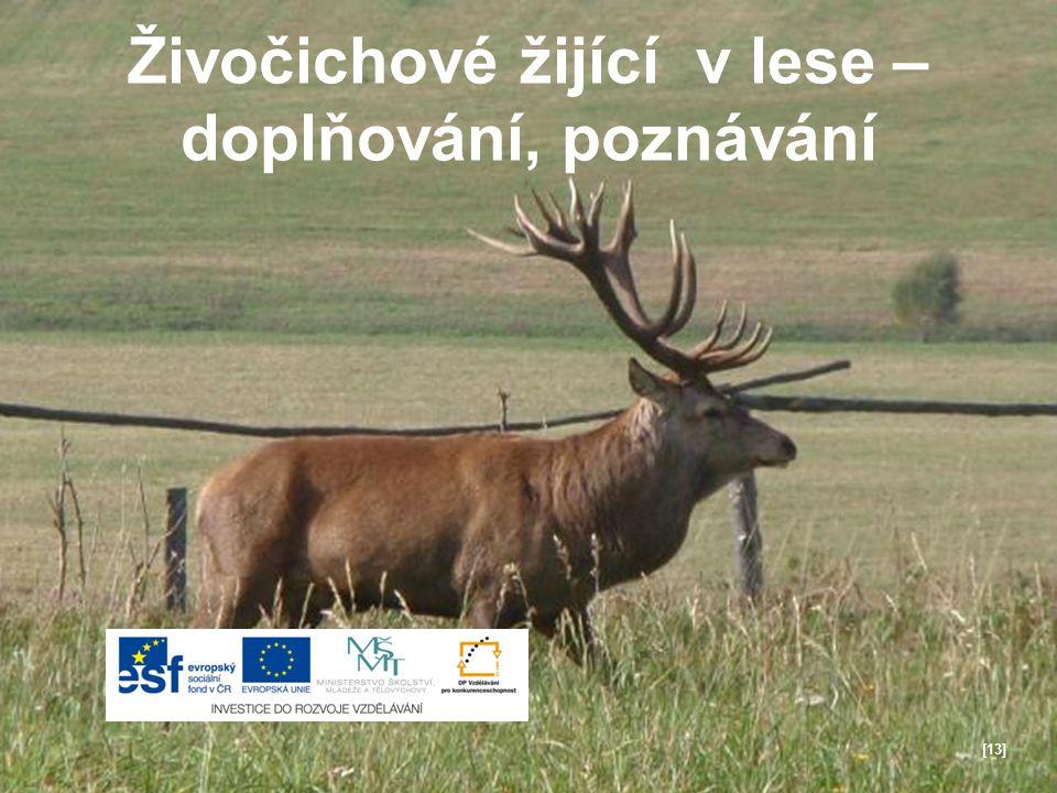 Živočichové žijící v lese – doplňování, poznávání [13]