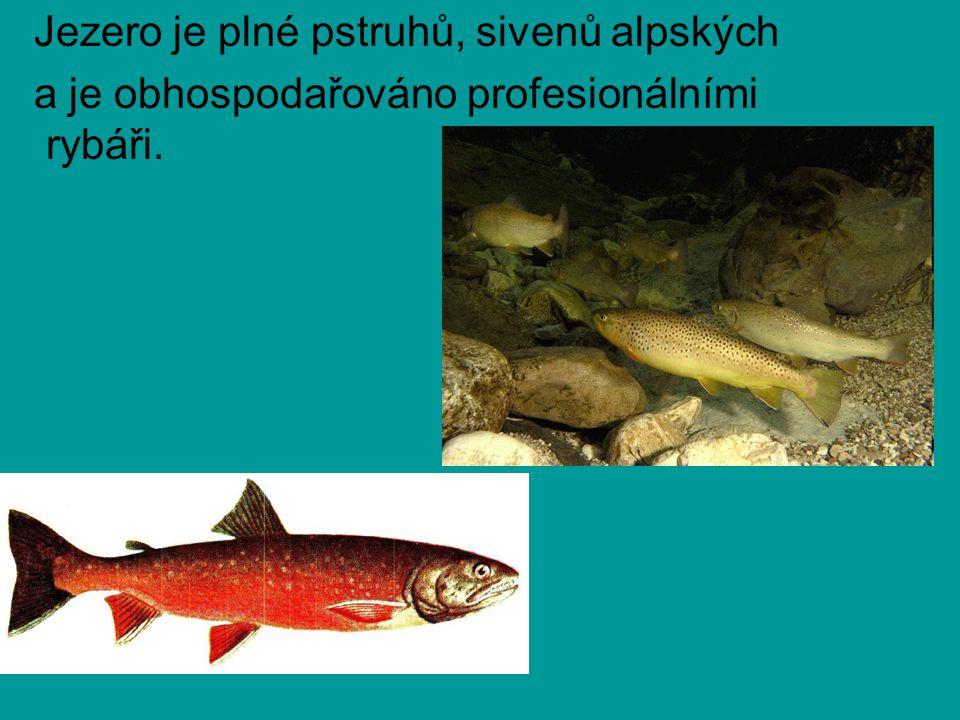 Jezero je plné pstruhů, sivenů alpských a je obhospodařováno profesionálními rybáři.