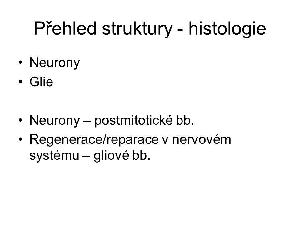 Přehled struktury - histologie Neurony Glie Neurony – postmitotické bb. Regenerace/reparace v nervovém systému – gliové bb.