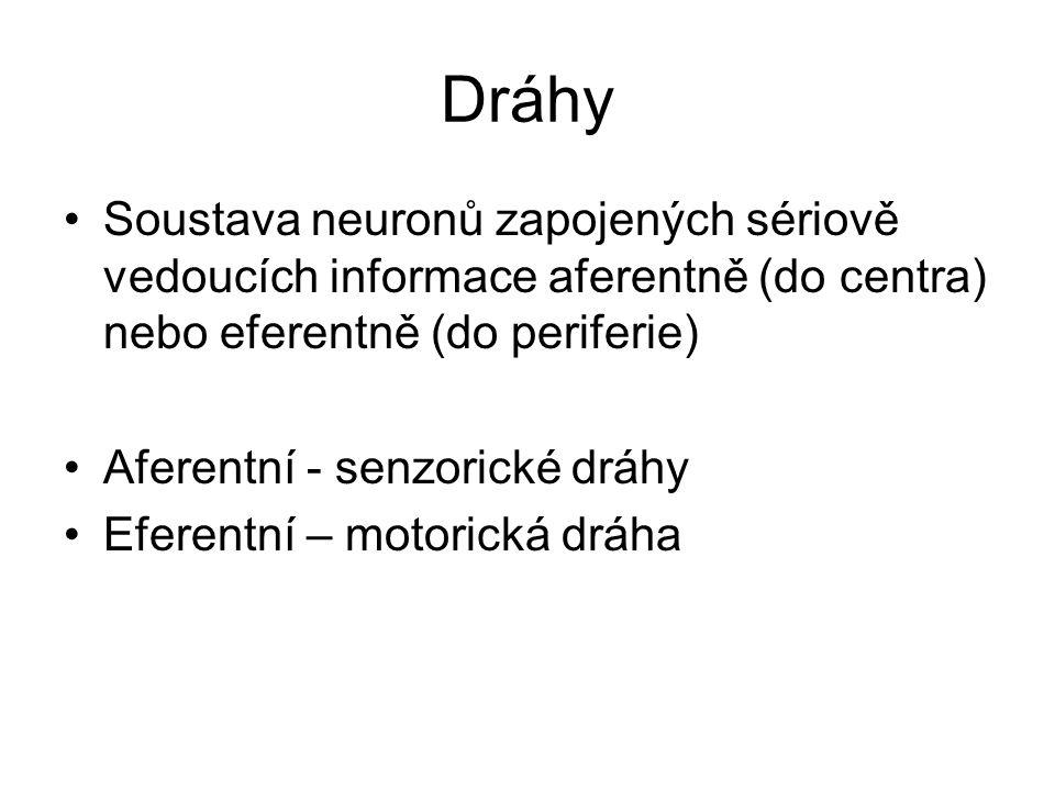 Dráhy Soustava neuronů zapojených sériově vedoucích informace aferentně (do centra) nebo eferentně (do periferie) Aferentní - senzorické dráhy Eferent