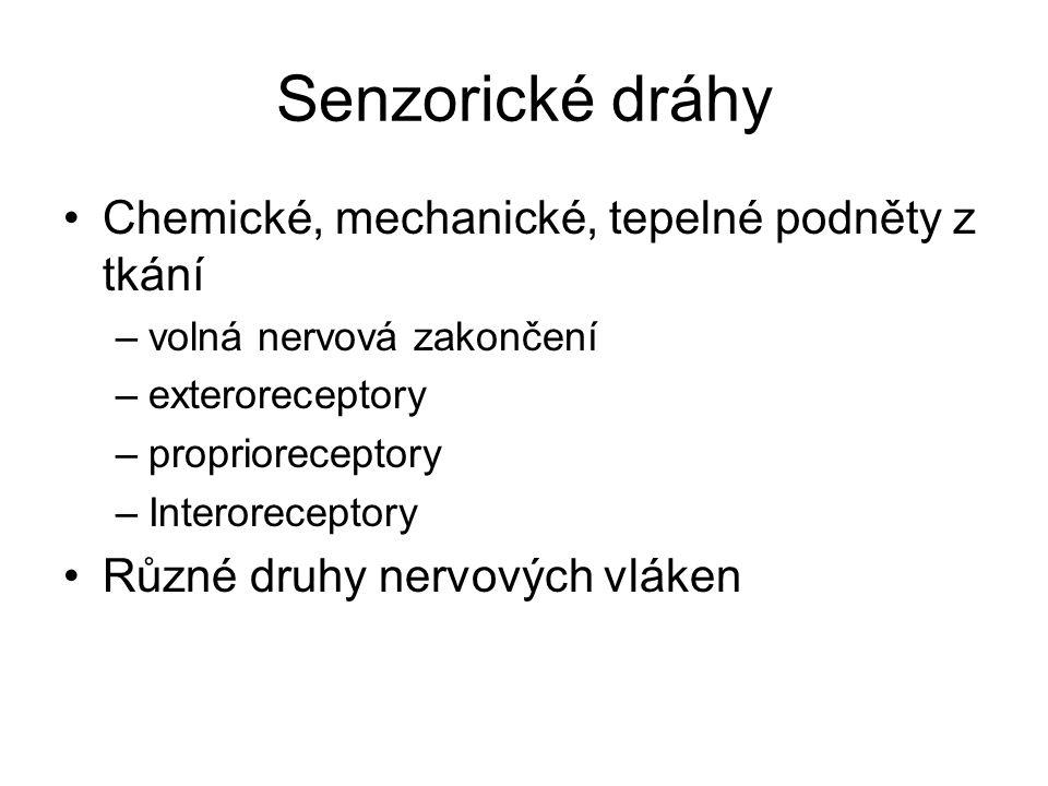 Senzorické dráhy Chemické, mechanické, tepelné podněty z tkání –volná nervová zakončení –exteroreceptory –proprioreceptory –Interoreceptory Různé druh