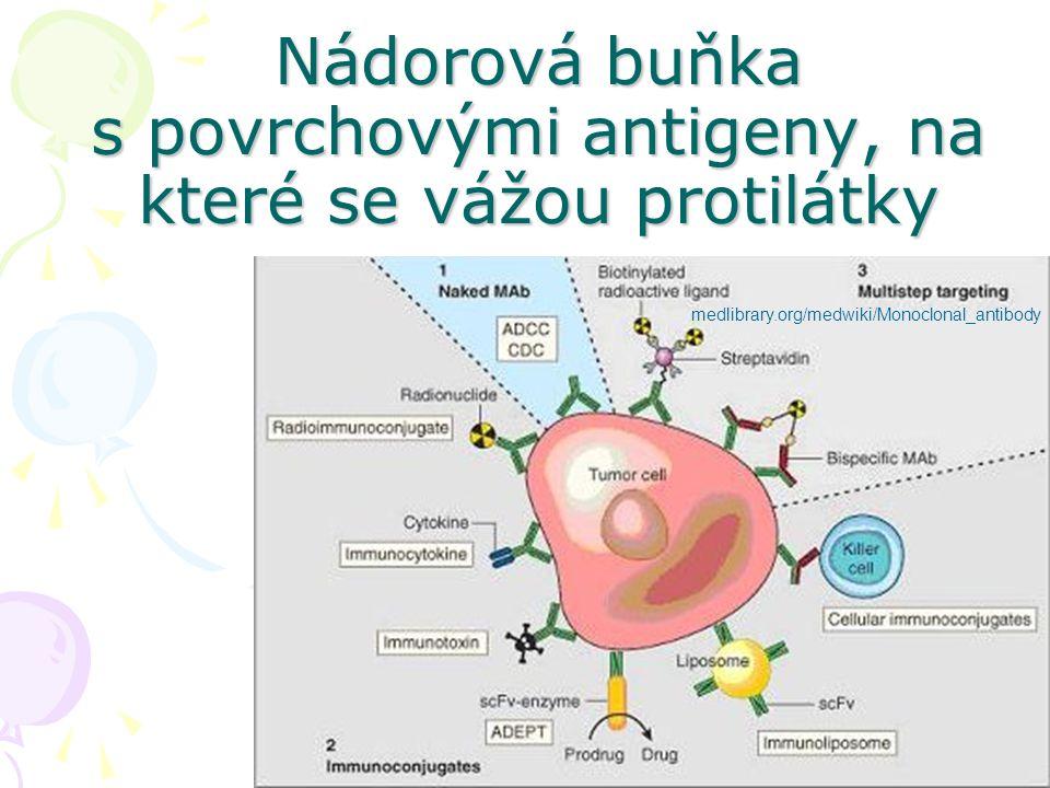 14 medlibrary.org/medwiki/Monoclonal_antibody Nádorová buňka s povrchovými antigeny, na které se vážou protilátky