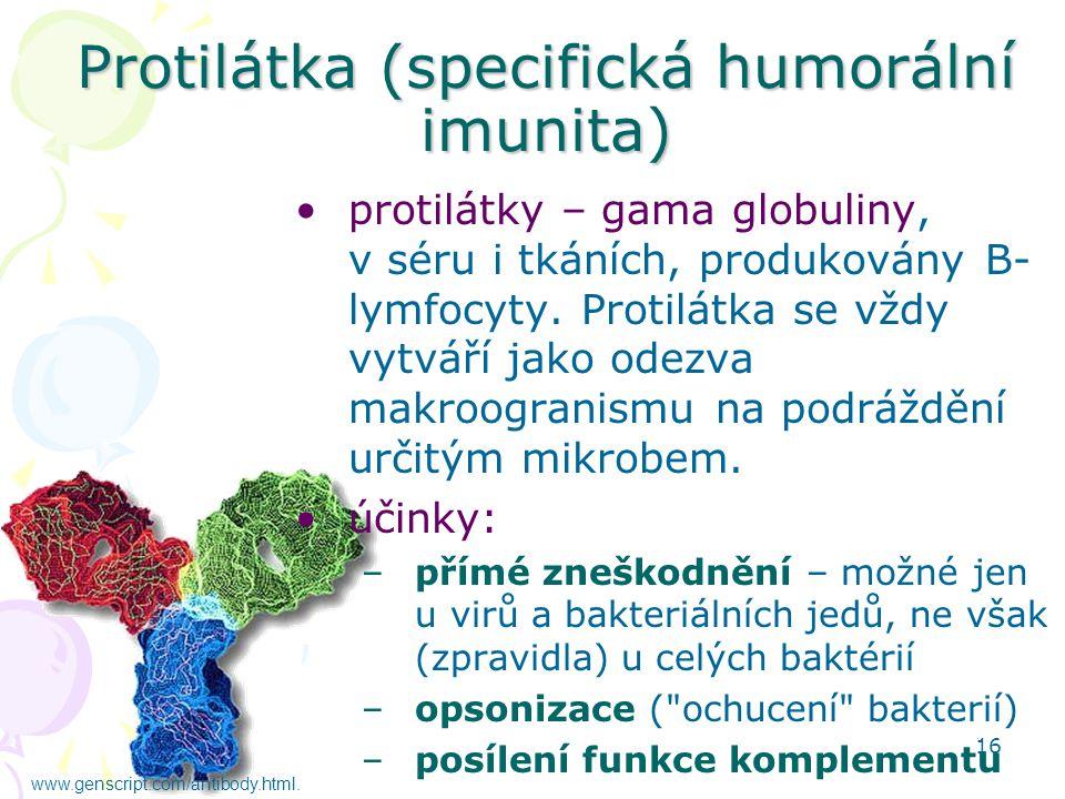 16 Protilátka (specifická humorální imunita) protilátky – gama globuliny, v séru i tkáních, produkovány B- lymfocyty. Protilátka se vždy vytváří jako