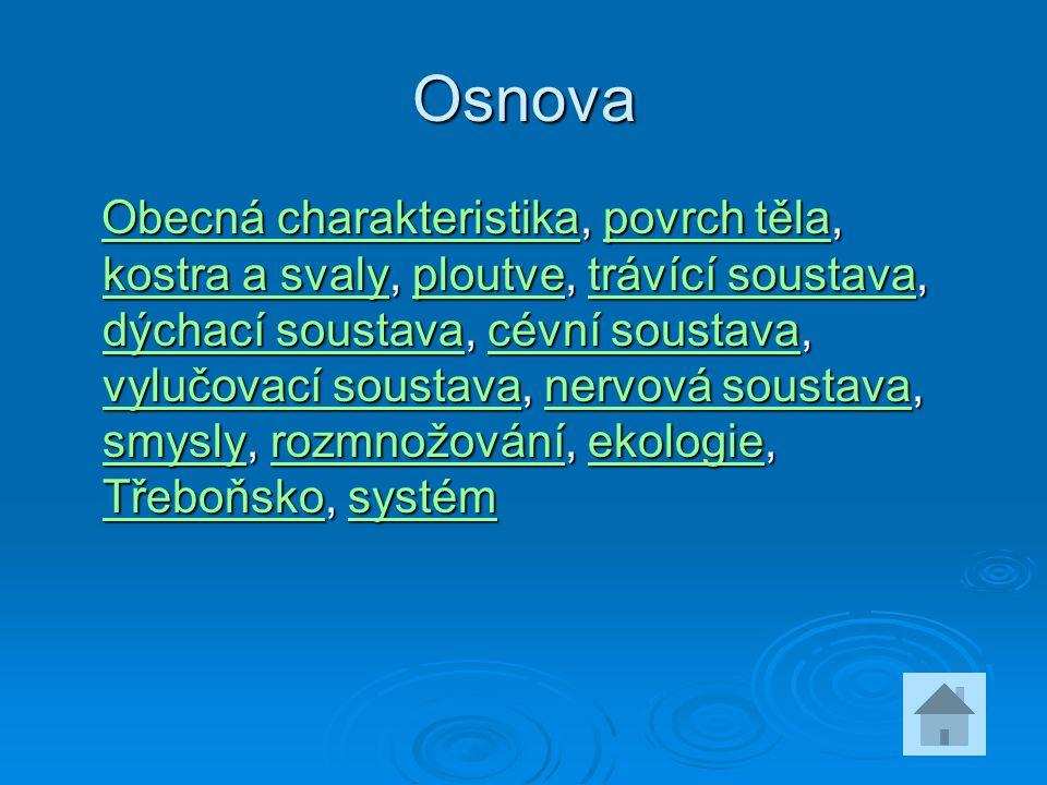 Osnova Obecná charakteristika, povrch těla, kostra a svaly, ploutve, trávící soustava, dýchací soustava, cévní soustava, vylučovací soustava, nervová