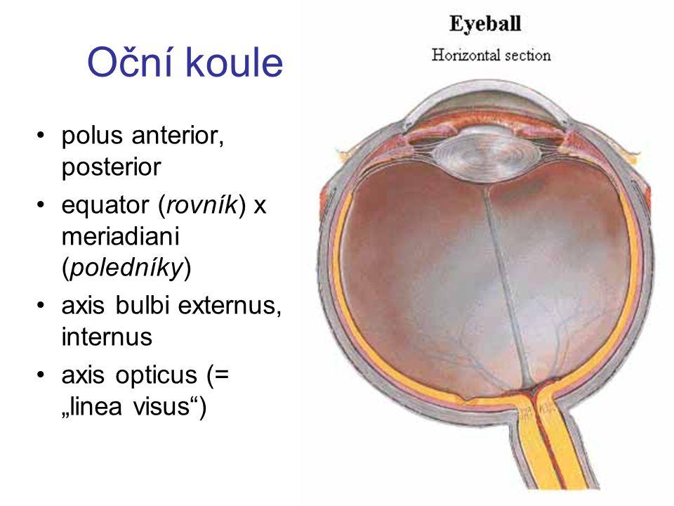 "Oční koule polus anterior, posterior equator (rovník) x meriadiani (poledníky) axis bulbi externus, internus axis opticus (= ""linea visus"")"