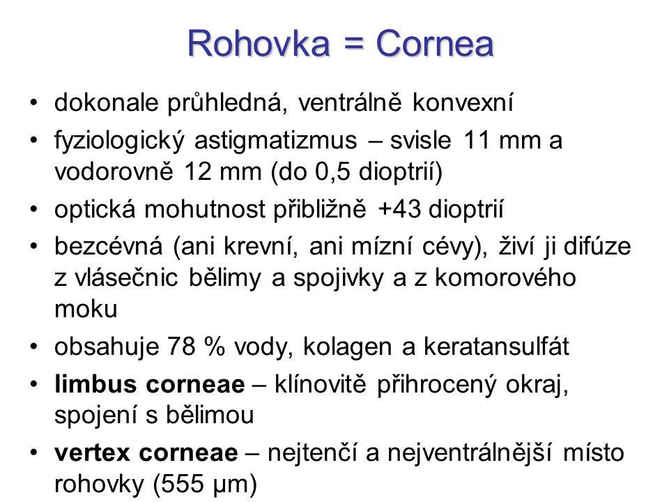 Rohovka = Cornea dokonale průhledná, ventrálně konvexní fyziologický astigmatizmus – svisle 11 mm a vodorovně 12 mm (do 0,5 dioptrií) optická mohutnos