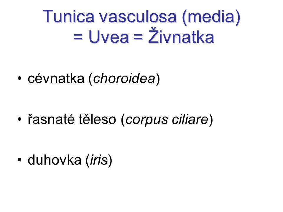 Tunica vasculosa (media) = Uvea = Živnatka cévnatka (choroidea) řasnaté těleso (corpus ciliare) duhovka (iris)