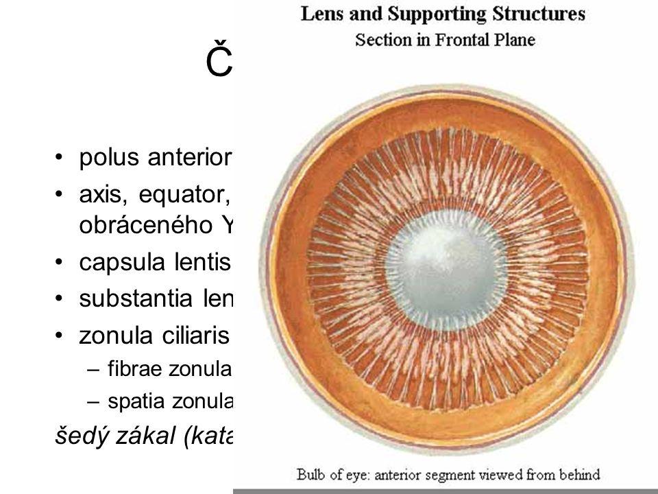 Čočka = Lens polus anterior, posterior axis, equator, radii (švy ve tvaru Y a obráceného Y) capsula lentis substantia lentis – cortex, nucleus zonula