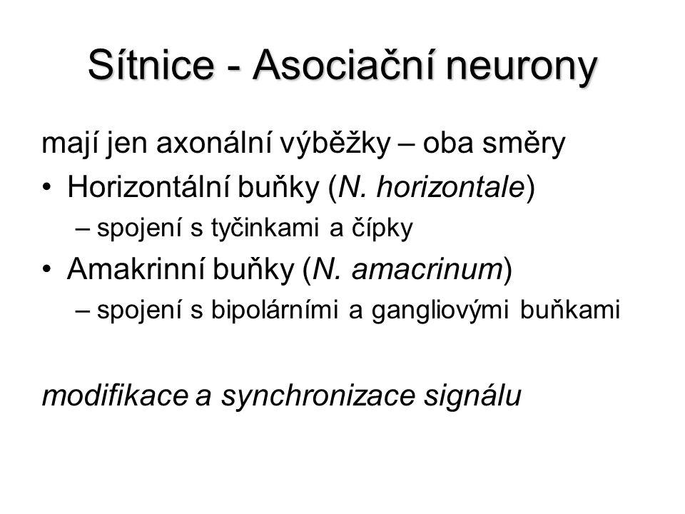 Sítnice - Asociační neurony mají jen axonální výběžky – oba směry Horizontální buňky (N. horizontale) –spojení s tyčinkami a čípky Amakrinní buňky (N.