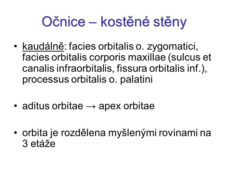 Očnice – okolní struktury okolní struktury: mediálně: cellulae ethmoidales (za tenkou lamina orbitalis ossis ethmoidalis) kaudálně: sinus maxillaris kraniálně: fossa cerebri anterior dorzálně: sinus cavernosus + fossa pterygopalatina
