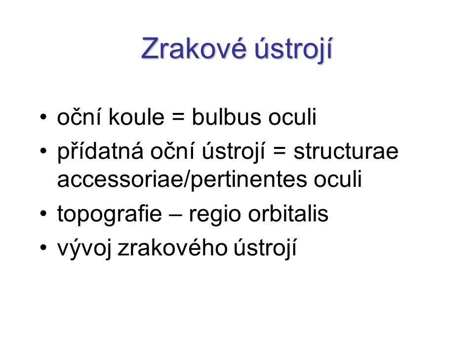 Zrakové ústrojí oční koule = bulbus oculi přídatná oční ústrojí = structurae accessoriae/pertinentes oculi topografie – regio orbitalis vývoj zrakovéh
