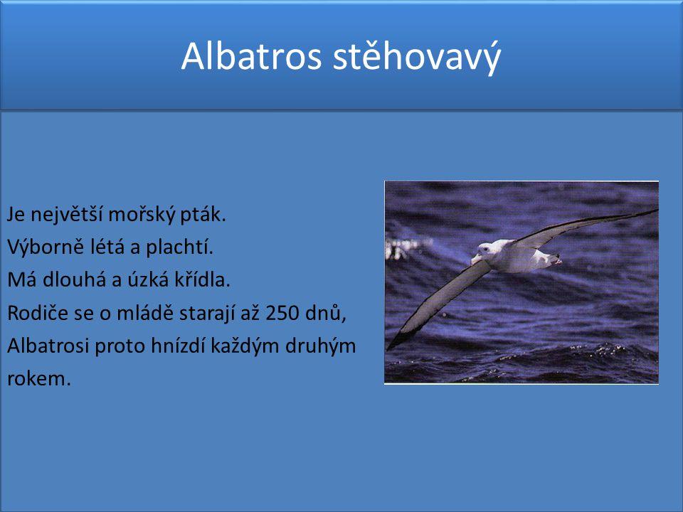 Albatros stěhovavý Je největší mořský pták.Výborně létá a plachtí.