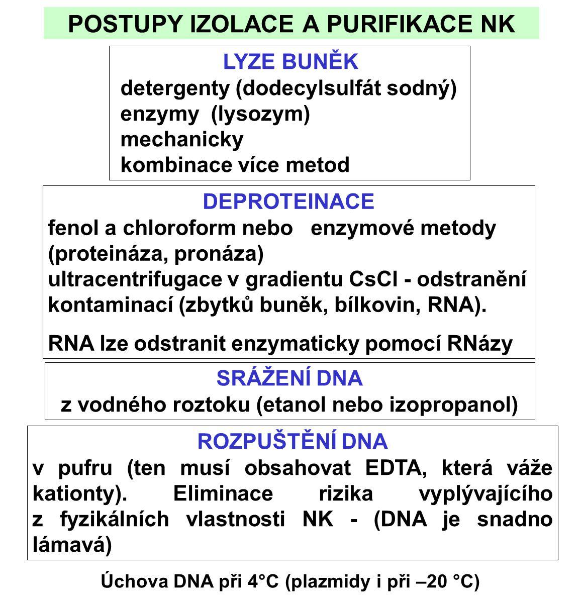 POSTUPY IZOLACE A PURIFIKACE NK LYZE BUNĚK detergenty (dodecylsulfát sodný) enzymy (lysozym) mechanicky kombinace více metod DEPROTEINACE fenol a chloroform nebo enzymové metody (proteináza, pronáza) ultracentrifugace v gradientu CsCl - odstranění kontaminací (zbytků buněk, bílkovin, RNA).