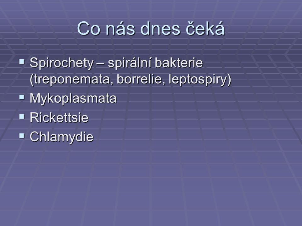 Defilé zločinců: Spirochety 1 Syfilis ve tkáni 2 Borrelie 3 Morfologie různých serovarů leptospir