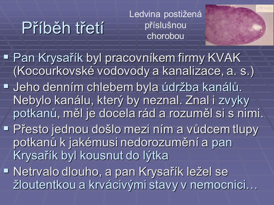Příběh třetí  Pan Krysařík byl pracovníkem firmy KVAK (Kocourkovské vodovody a kanalizace, a. s.)  Jeho denním chlebem byla údržba kanálů. Nebylo ka