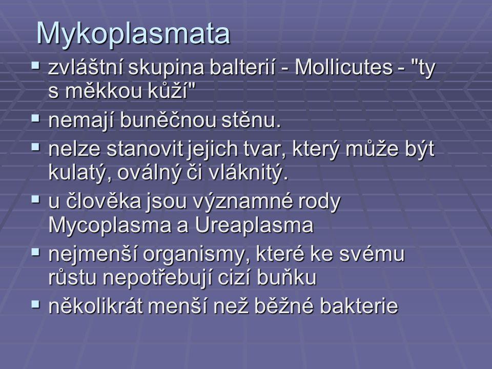 Mykoplasmata  zvláštní skupina balterií - Mollicutes -