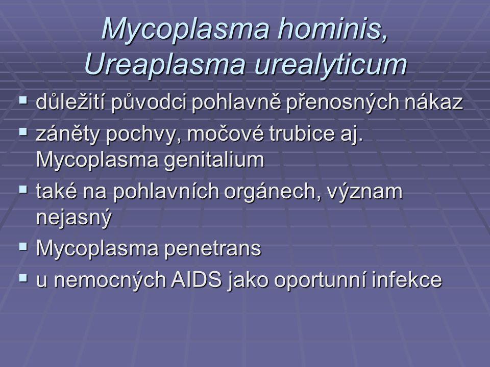 Mycoplasma hominis, Ureaplasma urealyticum  důležití původci pohlavně přenosných nákaz  záněty pochvy, močové trubice aj. Mycoplasma genitalium  ta