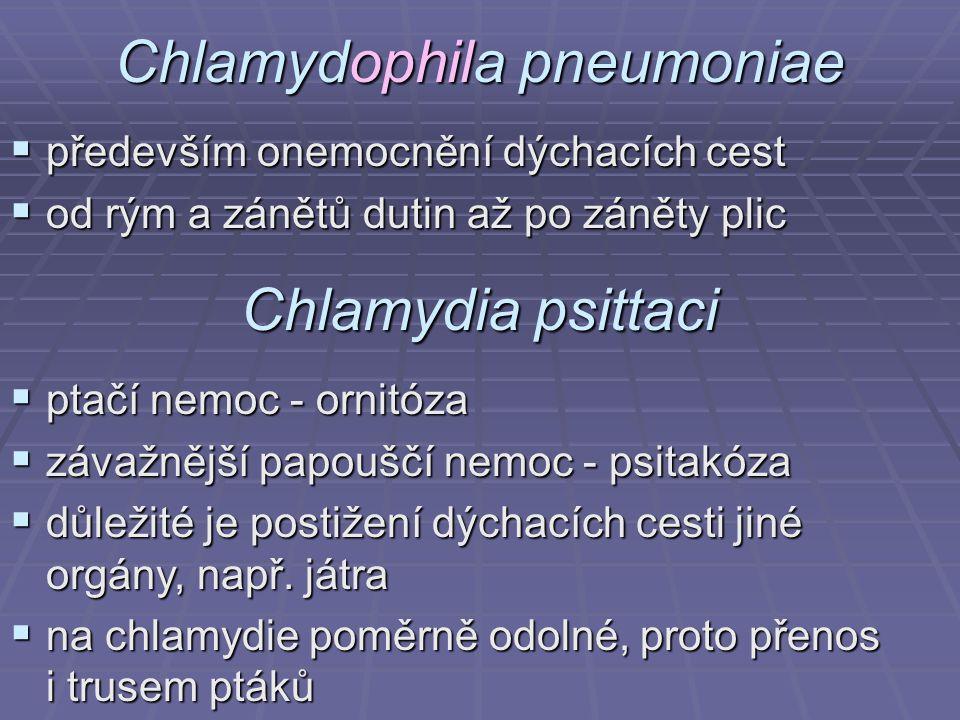 Chlamydophila pneumoniae  především onemocnění dýchacích cest  od rým a zánětů dutin až po záněty plic Chlamydia psittaci  ptačí nemoc - ornitóza 