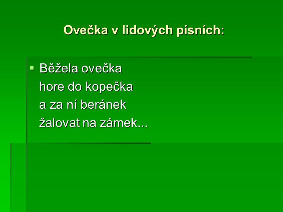 Ovečka v lidových písních:  Běžela ovečka hore do kopečka hore do kopečka a za ní beránek a za ní beránek žalovat na zámek... žalovat na zámek...