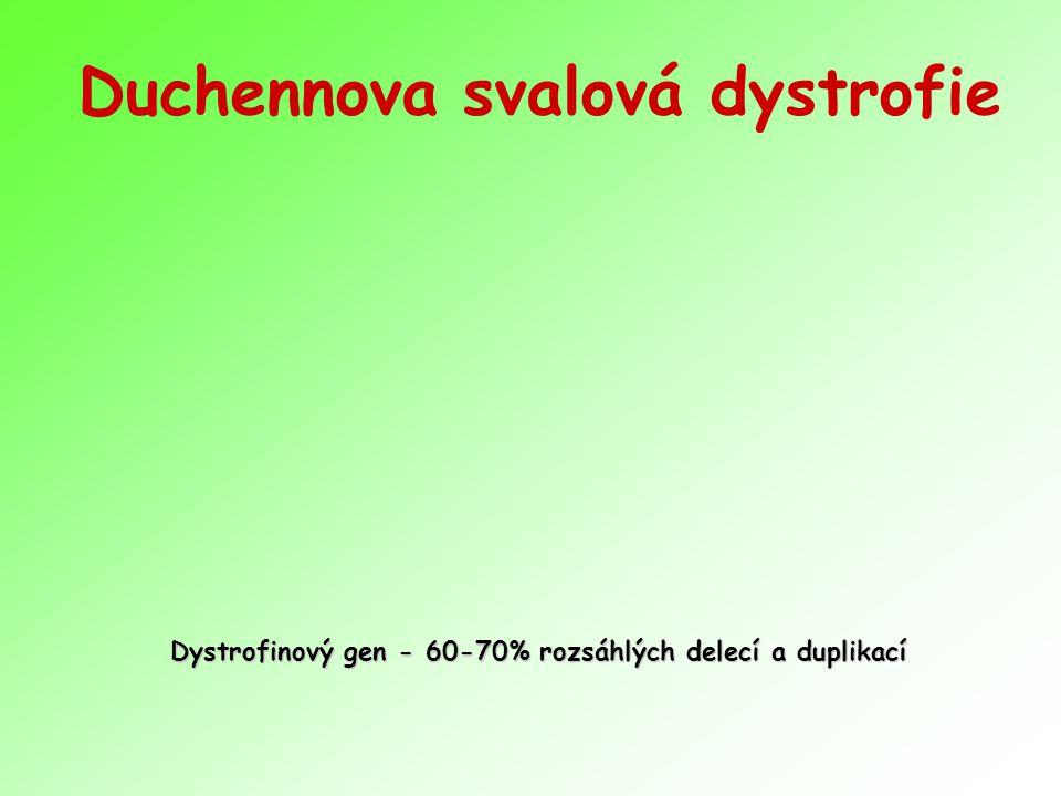 Duchennova svalová dystrofie Dystrofinový gen - 60-70% rozsáhlých delecí a duplikací