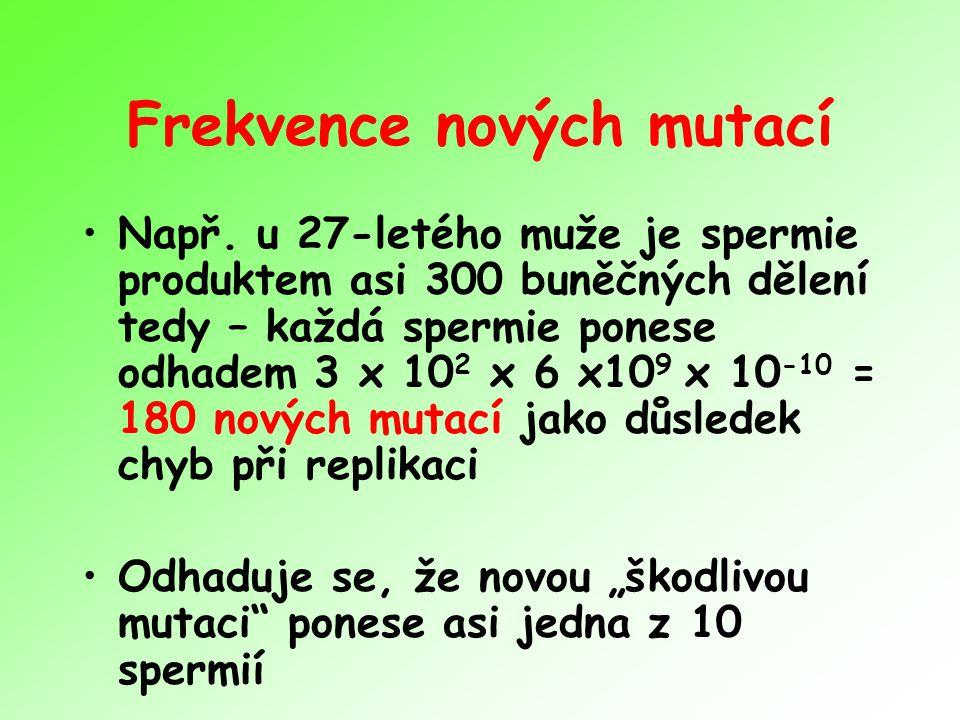 Frekvence nových mutací Např. u 27-letého muže je spermie produktem asi 300 buněčných dělení tedy – každá spermie ponese odhadem 3 x 10 2 x 6 x10 9 x