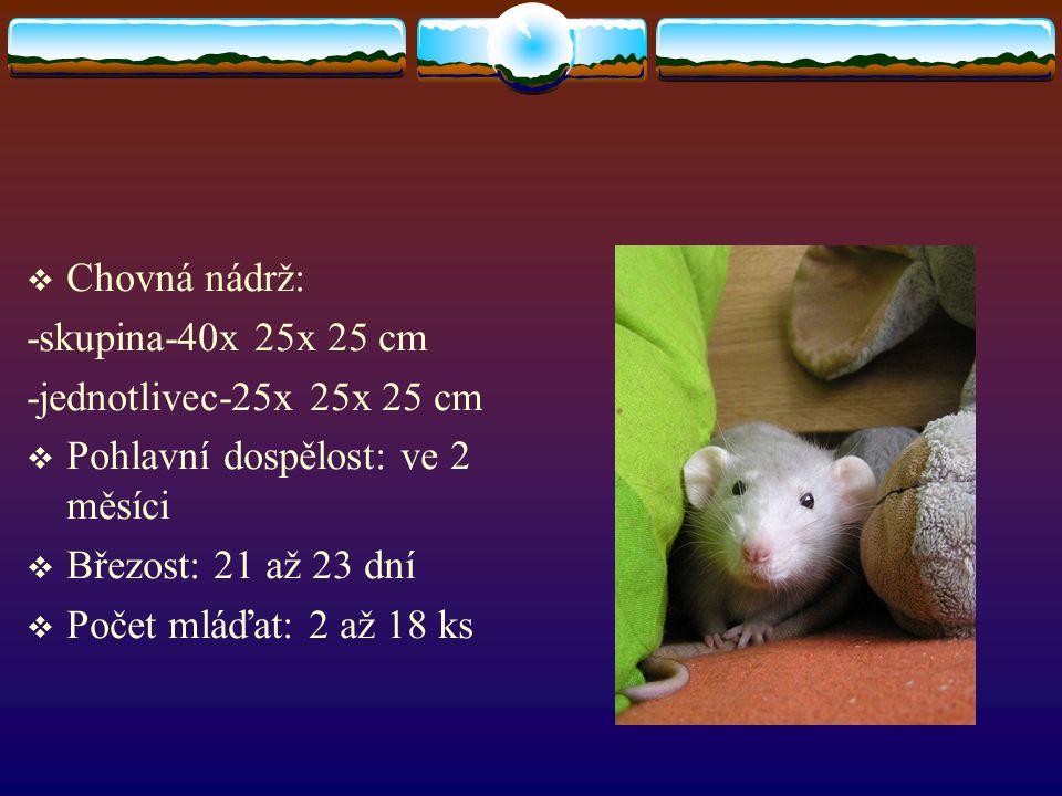  Chovná nádrž: -skupina-40x 25x 25 cm -jednotlivec-25x 25x 25 cm  Pohlavní dospělost: ve 2 měsíci  Březost: 21 až 23 dní  Počet mláďat: 2 až 18 ks