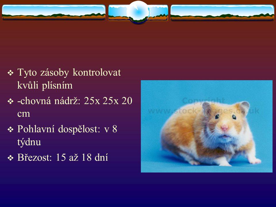  Tyto zásoby kontrolovat kvůli plísním  -chovná nádrž: 25x 25x 20 cm  Pohlavní dospělost: v 8 týdnu  Březost: 15 až 18 dní