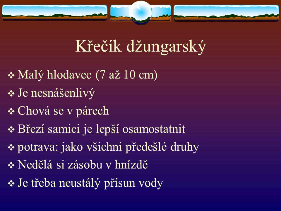Křečík džungarský  Malý hlodavec (7 až 10 cm)  Je nesnášenlivý  Chová se v párech  Březí samici je lepší osamostatnit  potrava: jako všichni před